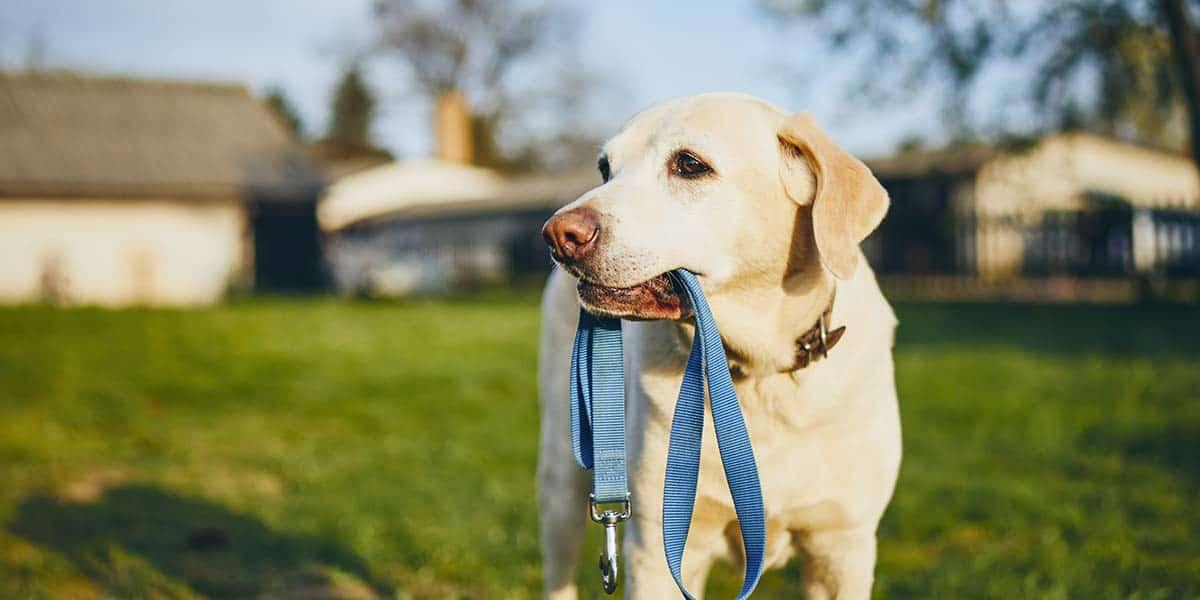 Come abituare il cane al guinzaglio: educarlo a passeggiare a guinzaglio