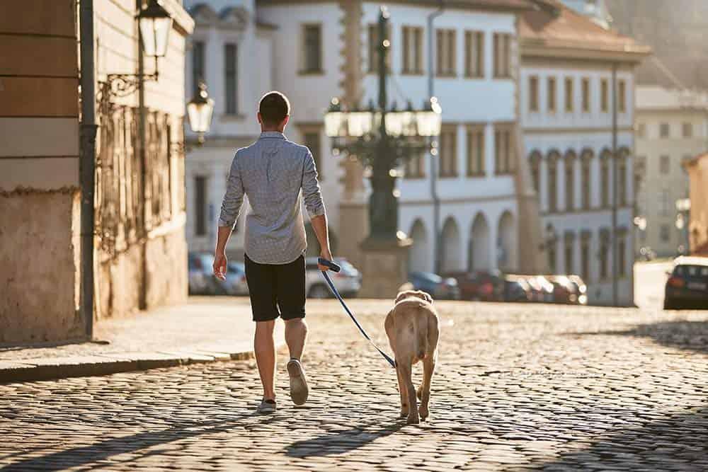 addestrare guinzaglio cane