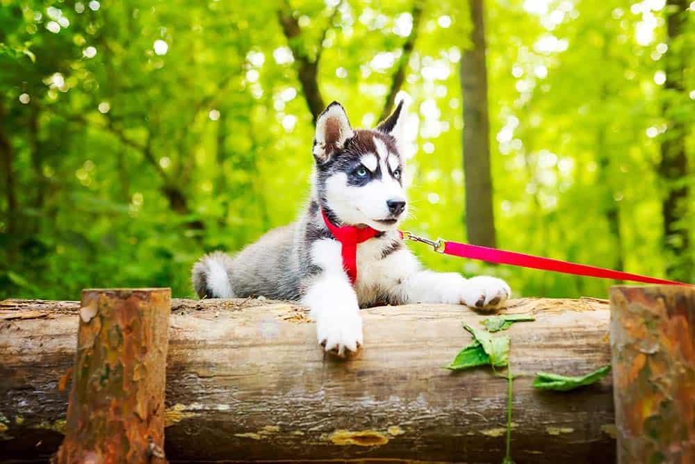 passeggiate guinzaglio cane
