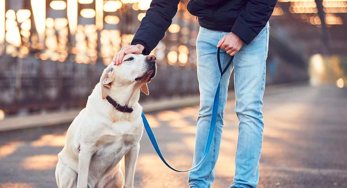 Meglio collare o pettorina per il cane? Vantaggi e svantaggi