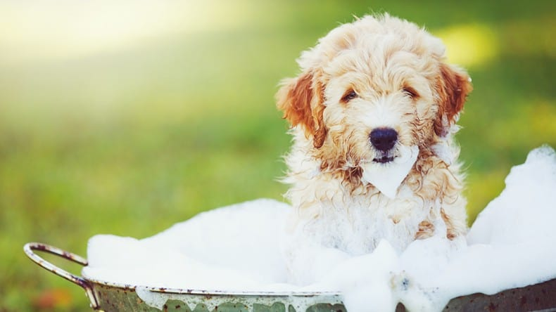 Il mio cane puzza: rimedi per eliminare i cattivi odori