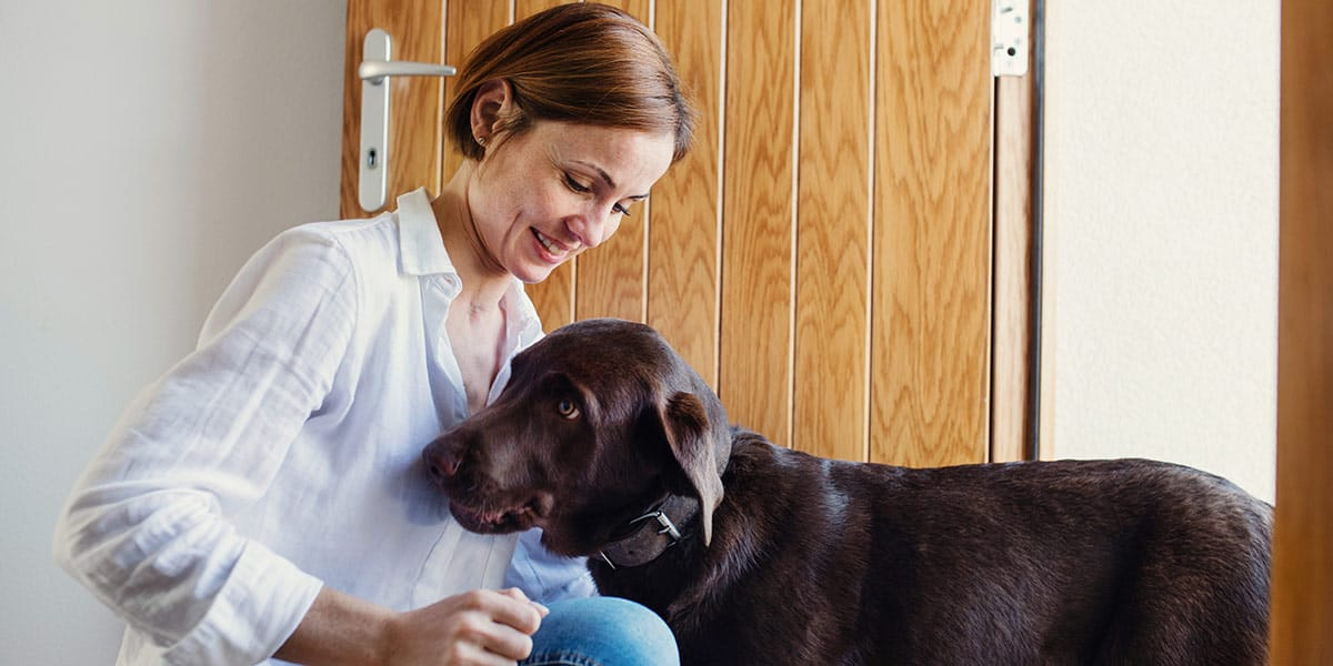insegnare cane bisogni fuori