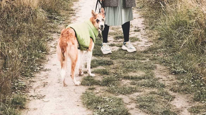 I migliori cappottini per il cane: quali scegliere per taglie piccole e medie