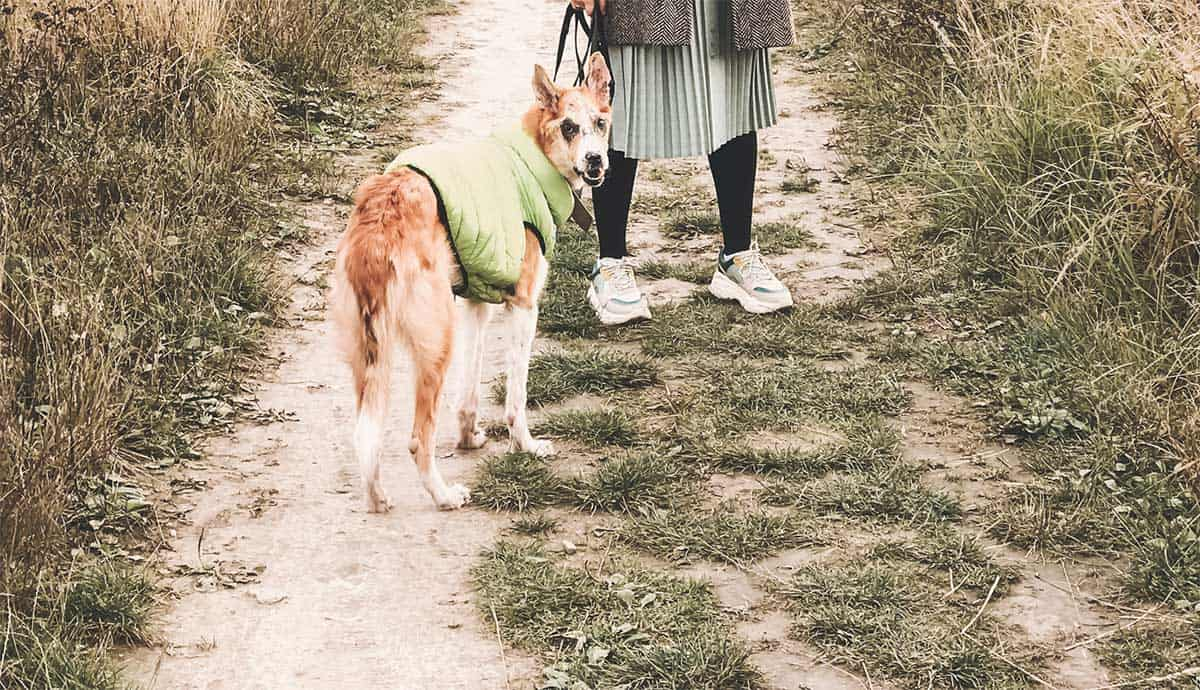 migliori cappottini cane