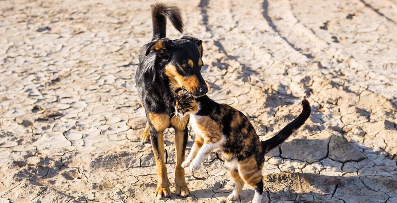 Come abituare il cane all'arrivo di un nuovo gatto