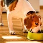 alimenti sconsigliati cane