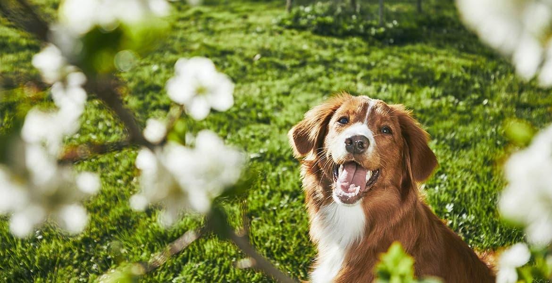 Il cane distrugge il giardino e fa buche: perché e come farlo smettere