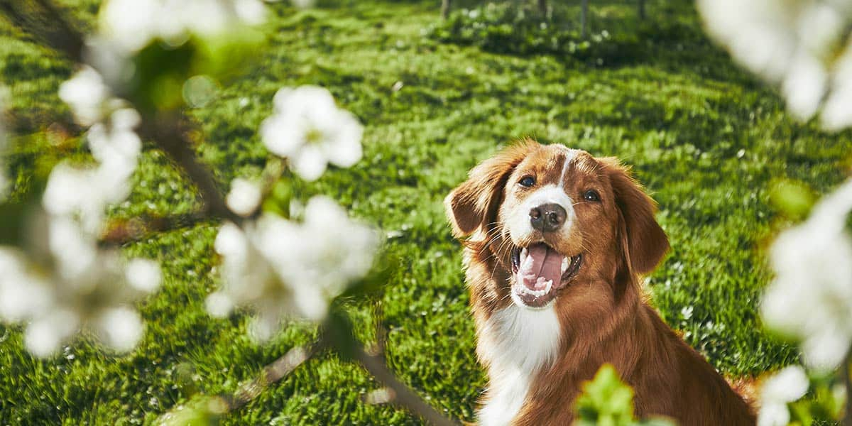 cane buche giardino