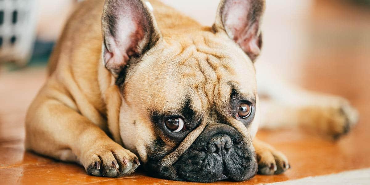 capire cane depresso