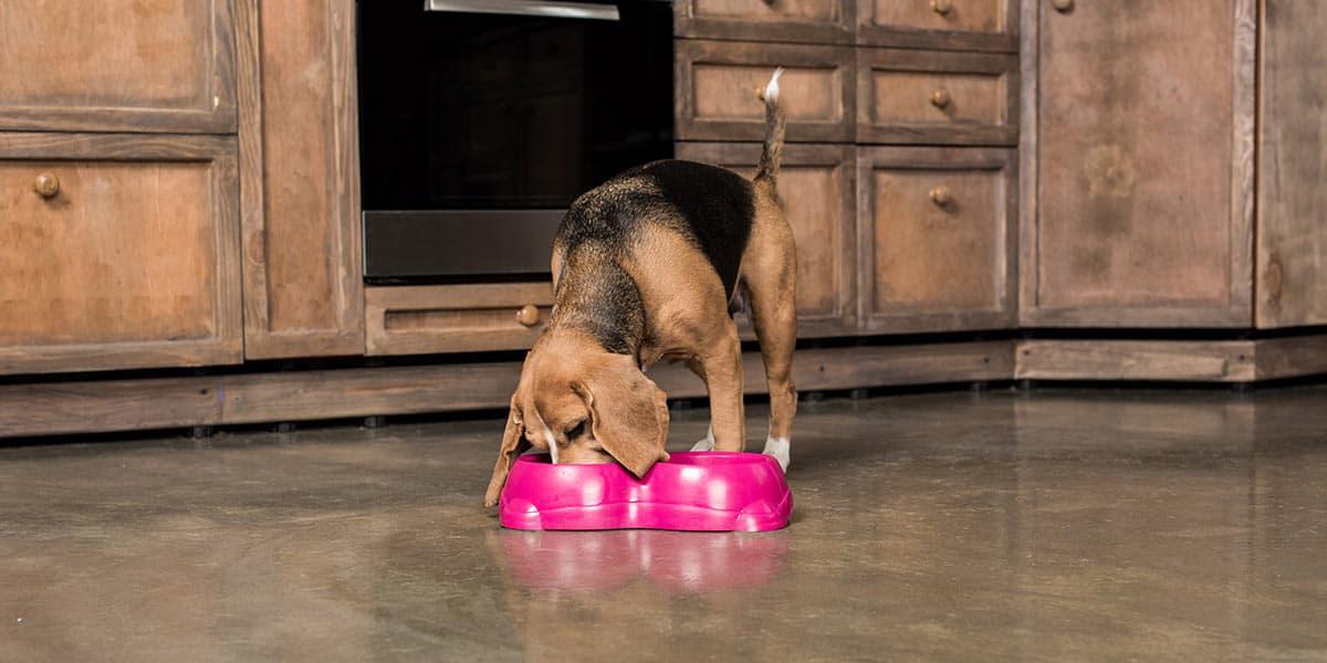 meglio crocchette cibo casa-umido