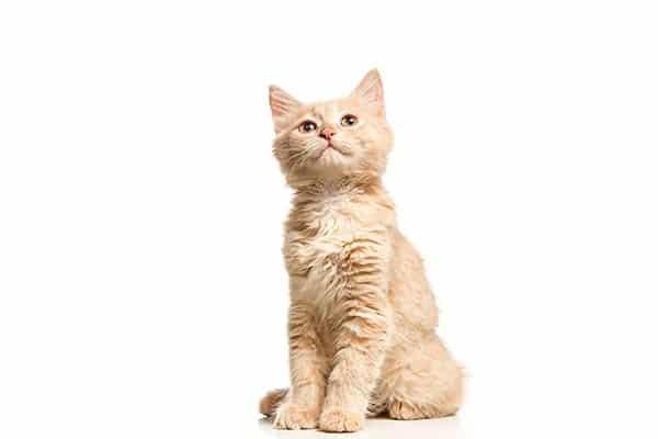 assicurazione gatto migliore