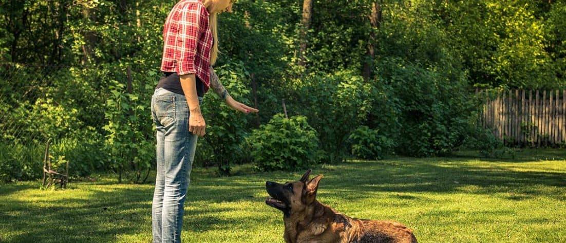 insegnare comandi cane