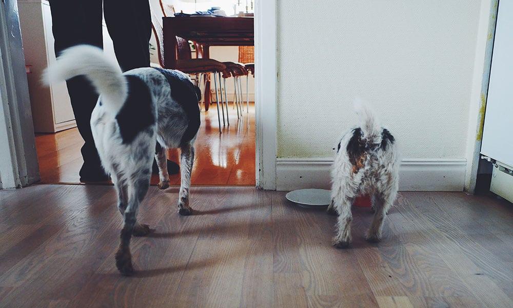 cane mangia calma