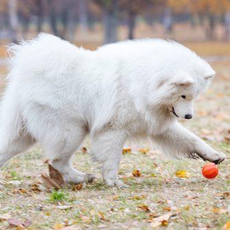 cane non gioca