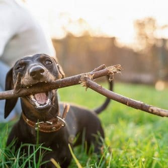 giochi educativi cane